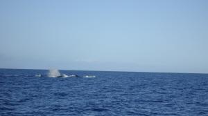 whale copy